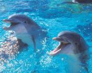cutedolphin